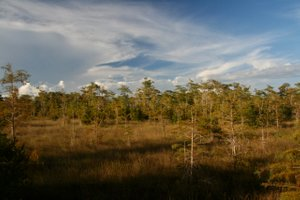 Big Cypress National Refuge